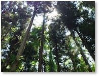 皇海山CampForest(旧:皇海山キャンプの森)