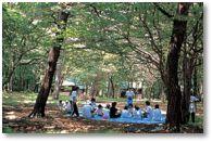 花見ヶ原森林公園キャンプ場