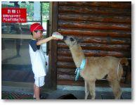 くじゅう自然動物園オートキャンプ場
